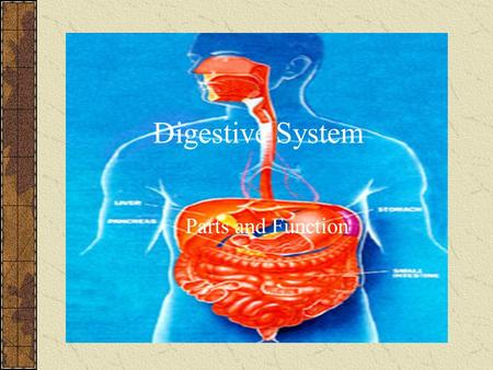 Digestive System Parts and Function. Digestion All organisms are composed of four complex biological molecules: lipids (or fats), proteins, carbohydrates,