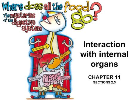 Interaction with internal organs CHAPTER 11 SECTIONS 2,3.