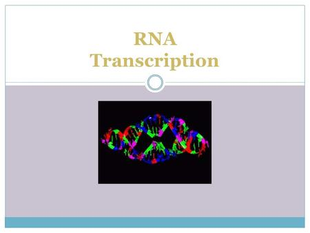 RNA Transcription.