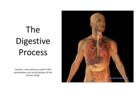 The Digestive Process Caution: some pictures used in this presentation are actual photos of the human body.