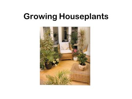 Growing Houseplants. Why grow houseplants? To enhance room decor –Fill in gaps –Brighten an area (empty wall space, unused fireplace, stairwell, corner)