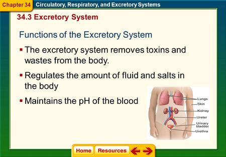 Circulatory, Respiratory, and Excretory Systems 34.3 Excretory System Functions of the Excretory System  The excretory system removes toxins and wastes.