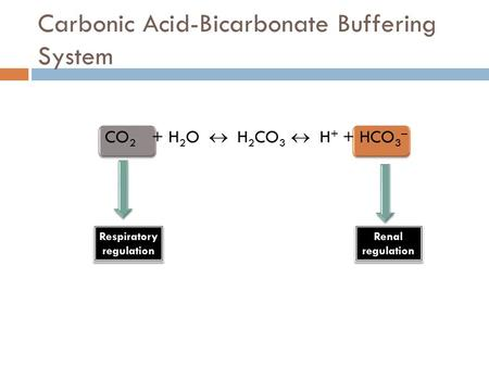 Carbonic Acid-Bicarbonate Buffering System CO 2 + H 2 O  H 2 CO 3  H + + HCO 3 – Respiratory regulation Respiratory regulation Renal regulation Renal.