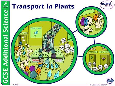 Boardworks GCSE Additional Science: Biology Transport in Plants