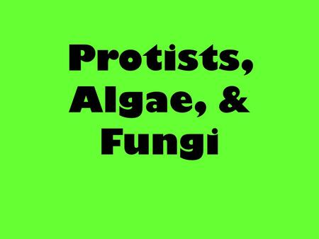 Protists, Algae, & Fungi. Plantlike Protists Have you ever seen seaweed at the beach ? Most commonly called algae Algae: plant-like protists, are autotrophs.