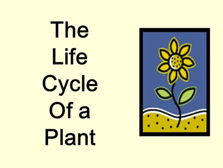 The Life Cycle Of a Plant It all starts with a SEED. Inside each seed is a tiny plant. The new plant is surrounded by a supply of food in the cotyledon.
