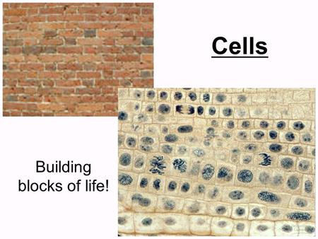 Building blocks of life!