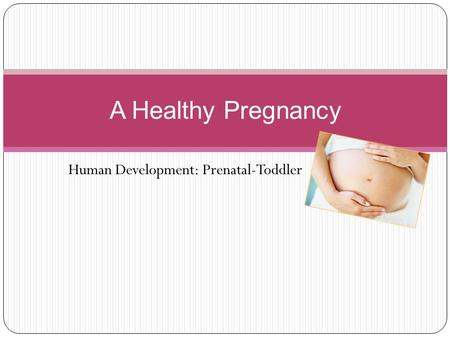 Human Development: Prenatal-Toddler