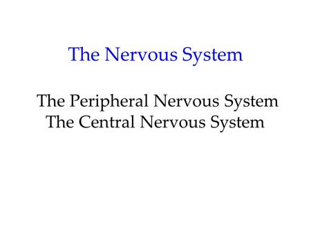 The Nervous System Nervous System: Consists of all the nerve cells. It is the body's speedy, electrochemical communication system. Central Nervous System.