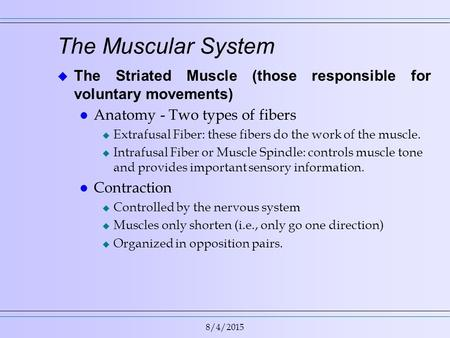 8/4/2015 The Muscular System  The Striated Muscle (those responsible for voluntary movements) l Anatomy - Two types of fibers u Extrafusal Fiber: these.