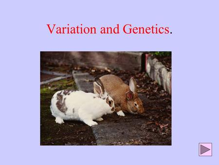 Variation and Genetics.