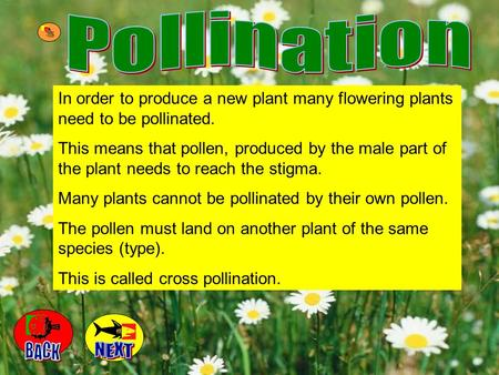 Pollination In order to produce a new plant many flowering plants need to be pollinated. This means that pollen, produced by the male part of the plant.