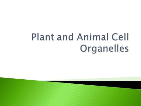 Animal CellPlant Cell Belonging to Both Plant AND Animal Cells.