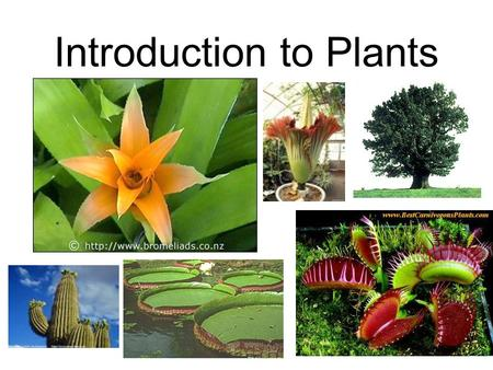 Introduction to Plants What is a plant? A multicellular eukaryote that can produce its own food through photosynthesis. Since it can do this, it is an...