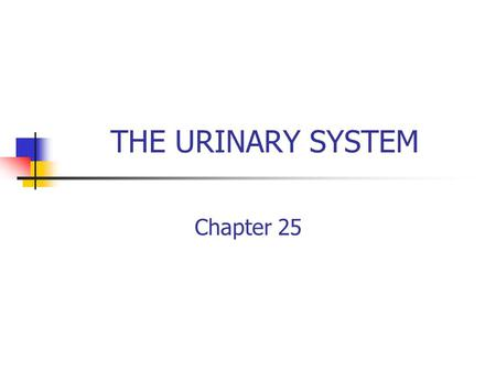 THE URINARY SYSTEM Chapter 25. Introduction Urology is the branch of medicine that deals with the urinary system. There are three functions of the urinary.