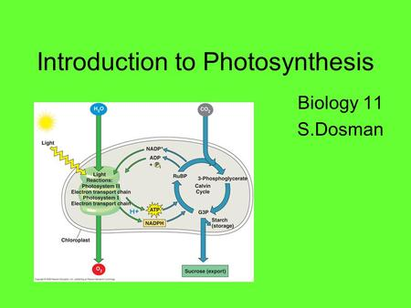 Introduction to Photosynthesis Biology 11 S.Dosman.
