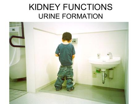 KIDNEY FUNCTIONS URINE FORMATION