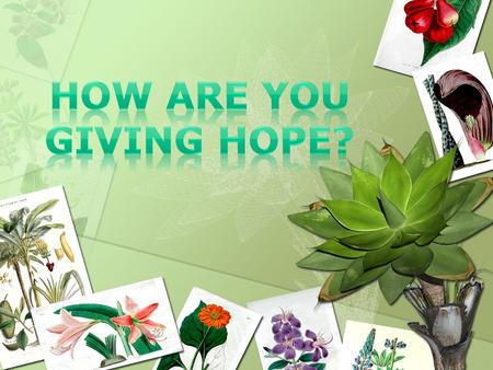 The HOPE organization stands for environmental protection and the rights of animals. Helping Of People Environmentally.