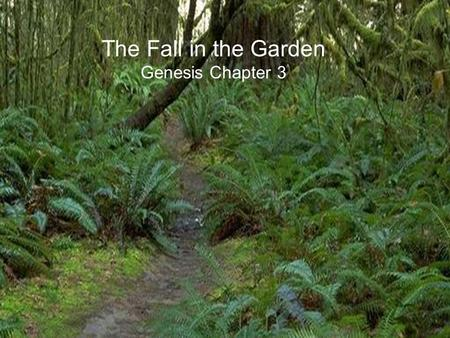 The Fall in the Garden Genesis Chapter 3. The Fall in the Garden – Setting the Stage Adam was created first out of the dust of the ground before Eve and.