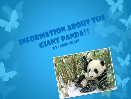 Information About The Giant Panda!! By: Anna Tran!