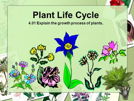 Plant Life Cycle 4.01 Explain the growth process of plants.