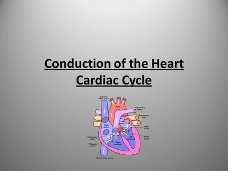 Conduction of the Heart Cardiac Cycle. Learning Objectives Explain how the heart works in relation to the conduction system Explain the cardiac cycle.
