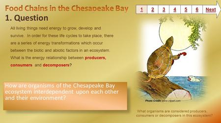 1. Question 1111 2222 3333 6666 5555 4444 Next How are organisms of the Chesapeake Bay ecosystem interdependent upon each other and their environment?
