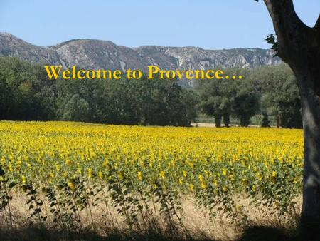 Welcome to Provence…. the Camargue, surrounded by grass fields,