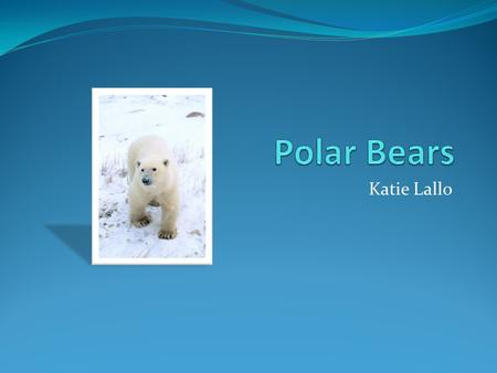 Polar Bears Katie Lallo.