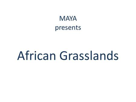 MAYA presents African Grasslands. What is a grassland? Grasslands are huge places that are very windy with little trees but lots of grass Grasslands are.
