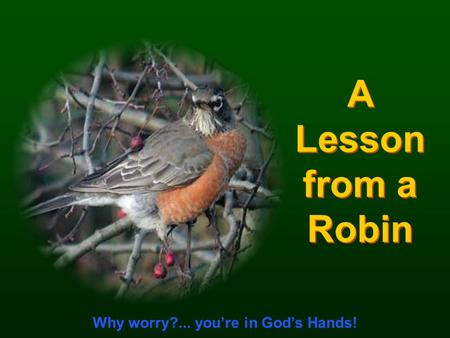 CLICK TO ADVANCE SLIDES ♫ Turn on your speakers! ♫ Turn on your speakers! A Lesson from a Robin A Lesson from a Robin Why worry?... you're in God's Hands!