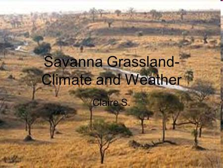 Savanna Grassland- Climate and Weather Claire S..