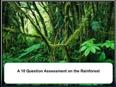 A 10 Question Assessment on the Rainforest