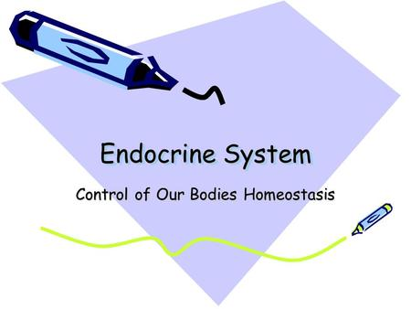 Endocrine System Control of Our Bodies Homeostasis.