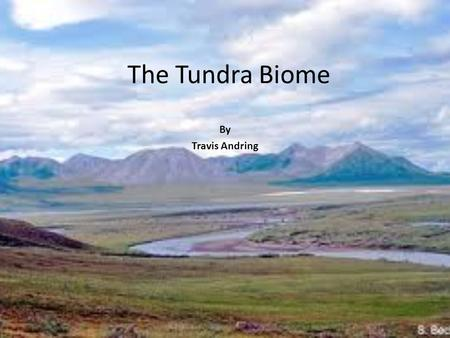 The Tundra Biome By Travis Andring.