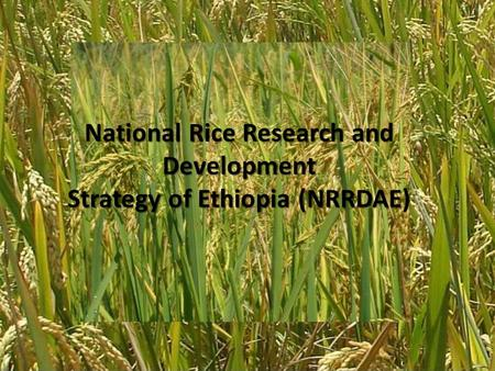 National Rice Research and Development Strategy of Ethiopia (NRRDAE National Rice Research and Development Strategy of Ethiopia (NRRDAE)