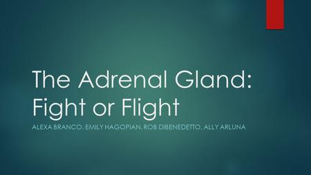 The Adrenal Gland: Fight or Flight ALEXA BRANCO, EMILY HAGOPIAN, ROB DIBENEDETTO, ALLY ARLUNA.