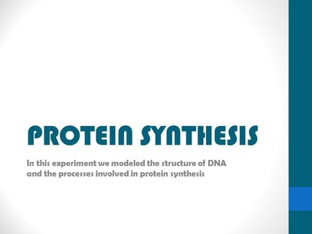 PROTEIN SYNTHESIS In this experiment we modeled the structure of DNA and the processes involved in protein synthesis.