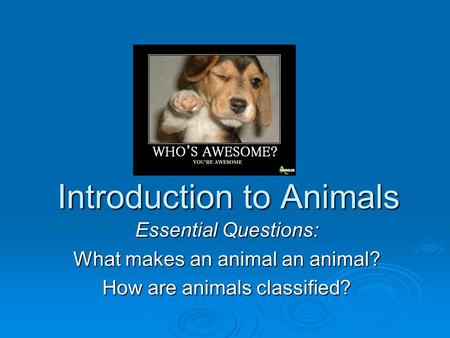 Introduction to Animals Essential Questions: What makes an animal an animal? How are animals classified?