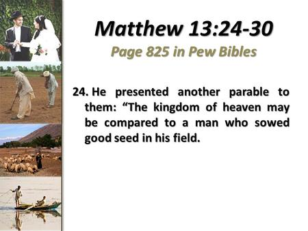 "Matthew 13:24-30 Page 825 in Pew Bibles 24. He presented another parable to them: ""The kingdom of heaven may be compared to a man who sowed good seed in."
