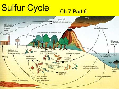 Sulfur Cycle Ch 7 Part 6.
