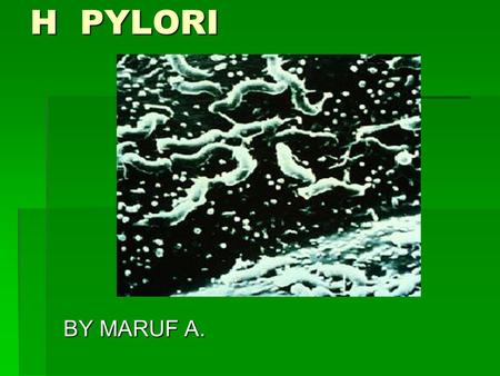 H PYLORI BY MARUF A.. Historical Background  1982 - Marshall and Warren identified and subsequently cultured the gastric bacterium, Campylobacter pyloridis,