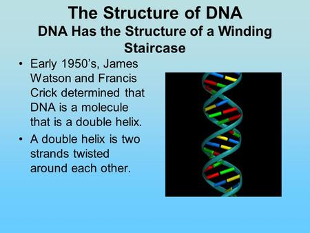 The Structure of DNA DNA Has the Structure of a Winding Staircase