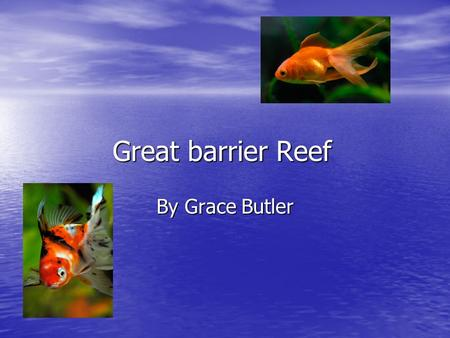 Great barrier Reef By Grace Butler What fish eat Fish would normally eat coral plankton and maybe they would be able to eat some other animals in the.
