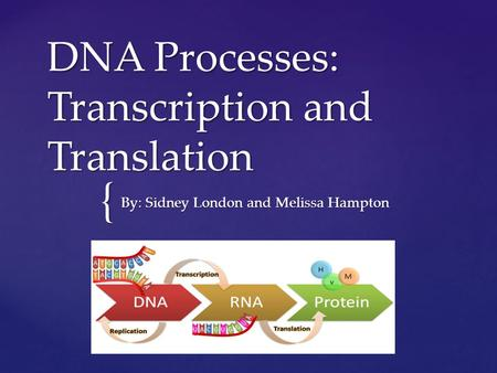 { DNA Processes: Transcription and Translation By: Sidney London and Melissa Hampton.