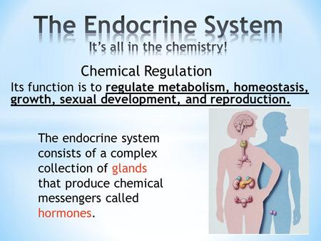 The endocrine system consists of a complex collection of glands that produce chemical messengers called hormones. Its function is to regulate metabolism,