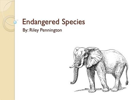 Endangered Species By: Riley Pennington. What is an endangered species? There are certain categories and stages of endangerment: Lower Risk, Threatened,