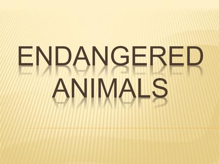 Endangered animals: species that are in danger of going extinct or destroyed.