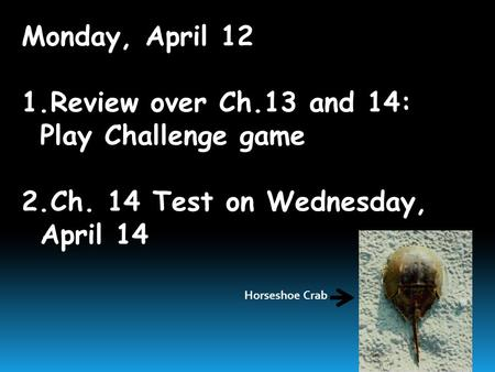 Monday, April 12 1.Review over Ch.13 and 14: Play Challenge game 2.Ch. 14 Test on Wednesday, April 14 Horseshoe Crab.