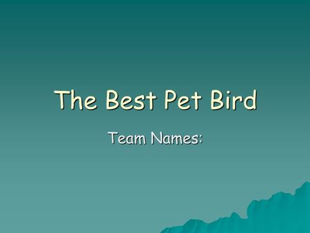 The Best Pet Bird Team Names:. The Best Pet Bird, Page 2 Presented by  The 3 birds that we researched were:  Parrots  Canaries  Cockatiels.